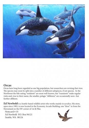 NC #35 Orcas