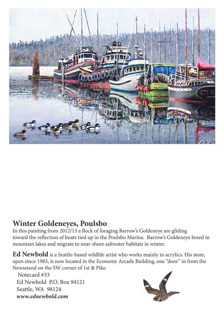 NC #33 Winter Goldeneyes, Poulsbo