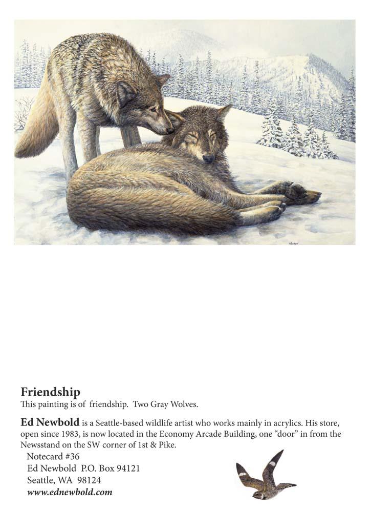 NC #36 Friendship
