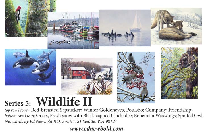 Series 9 Box of Notecards Wildlife 2