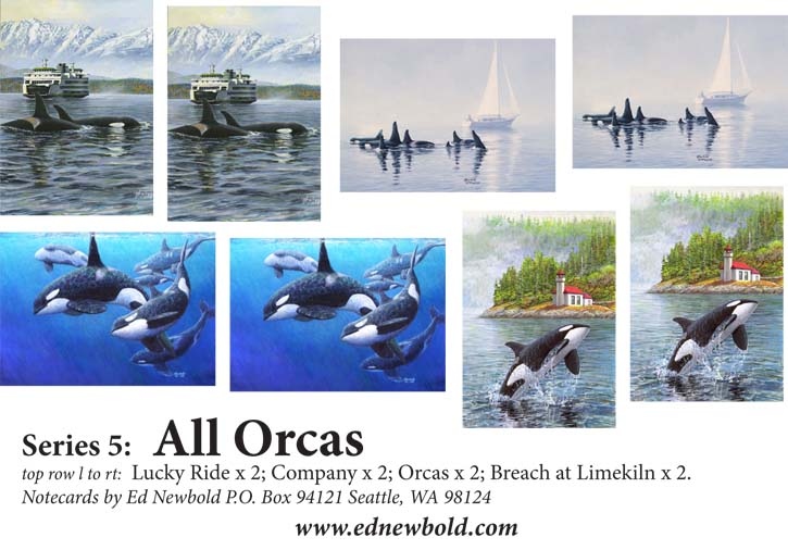 Series 5 Box of Notecards All Orcas