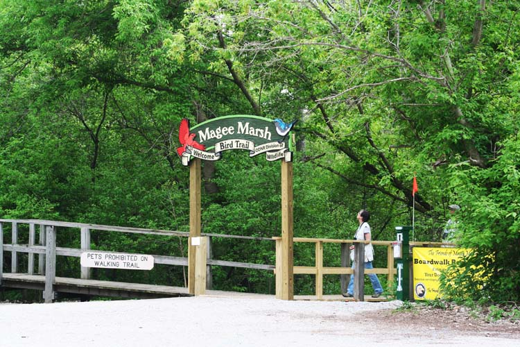 The entrance to the Magee Marsh boardwalk