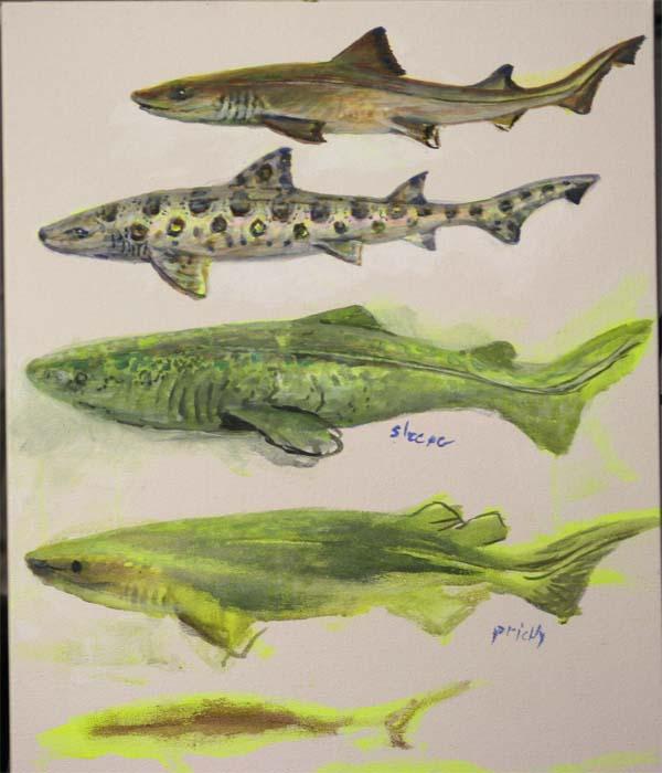 sharks 2 for blog
