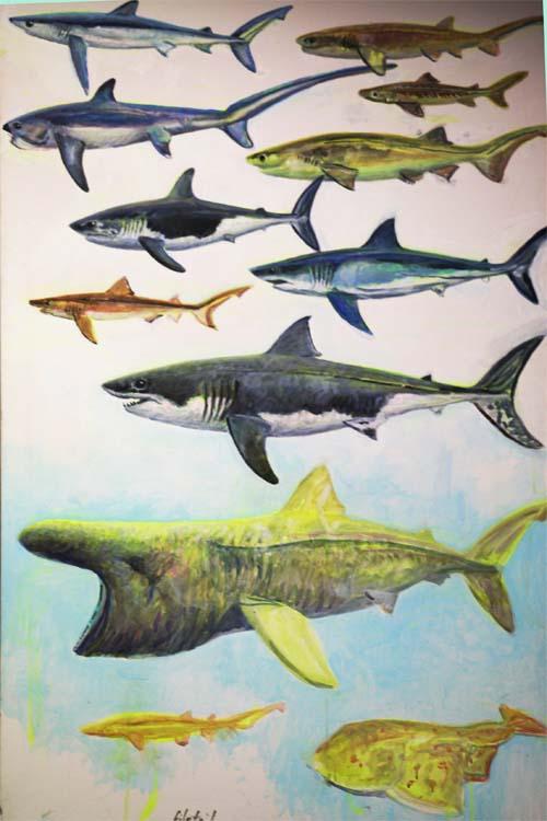 sharks for blog