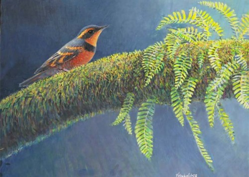 Varied Thrush original