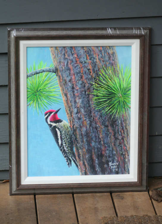 Red-naped Sapsucker framed original