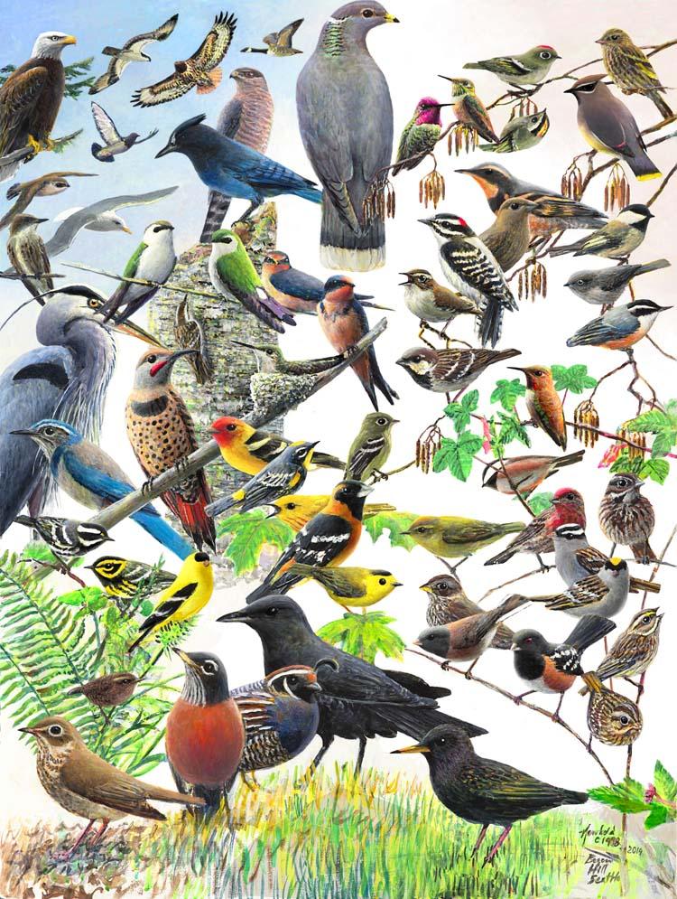 beacon hill birds scan Nov 1 2014 for ws