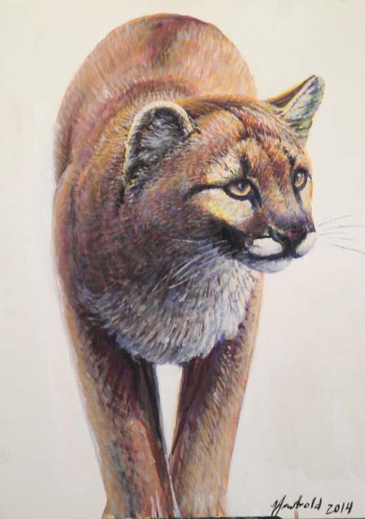 cougar 11 22 14