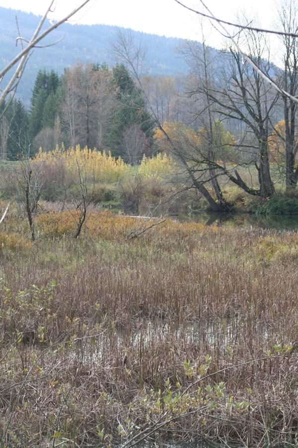 little king blog wetlands