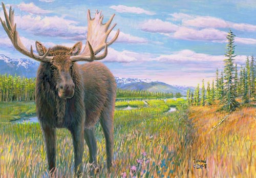 #448 Moose on the Chilcotin Plateau (for 11 x 14 mat)