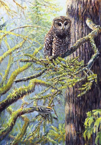 #178 Spotted Owl