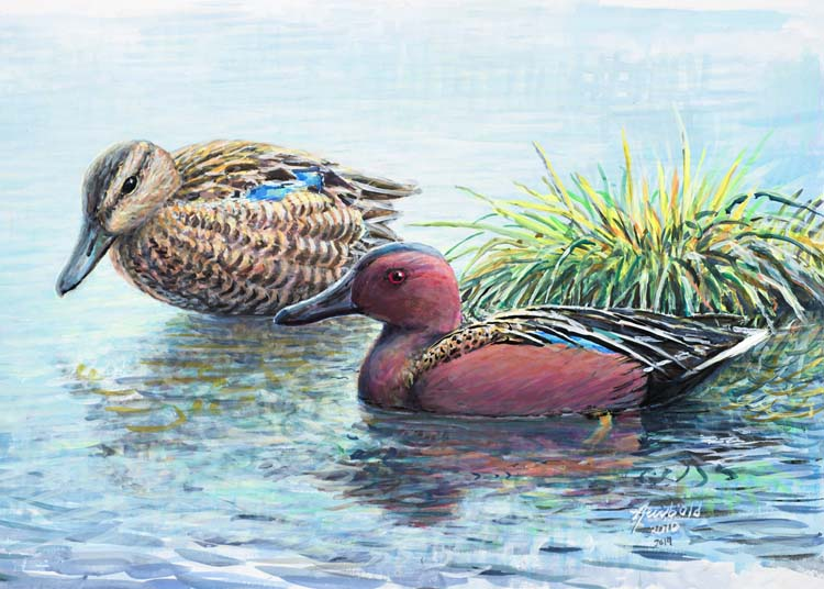 #403 Cinnamon Teal pair