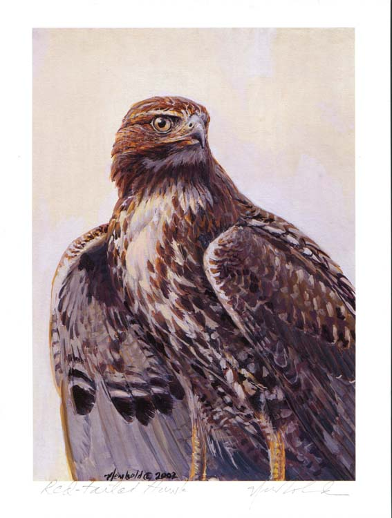 #49 Red-tail