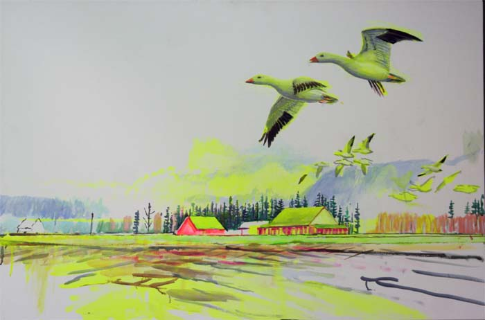 skagit snow geese for website 12 17 14