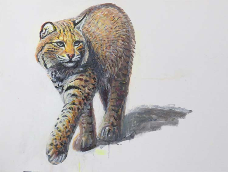 bobcat and shadow for ws