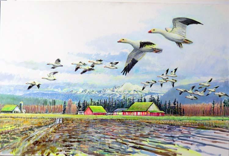 skagit snow geese 1 18 15 for blog