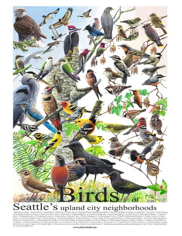 birds of seattle 14 x 18 for website