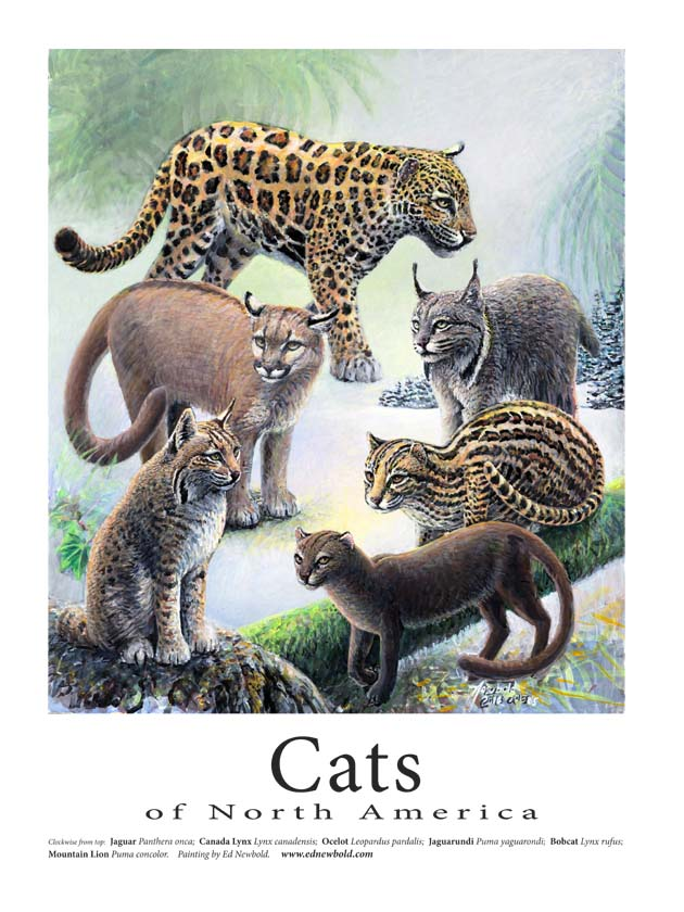 cats 18 x 24 for website