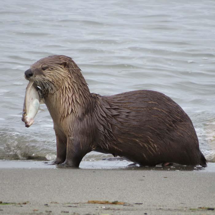 ghwss otter 1