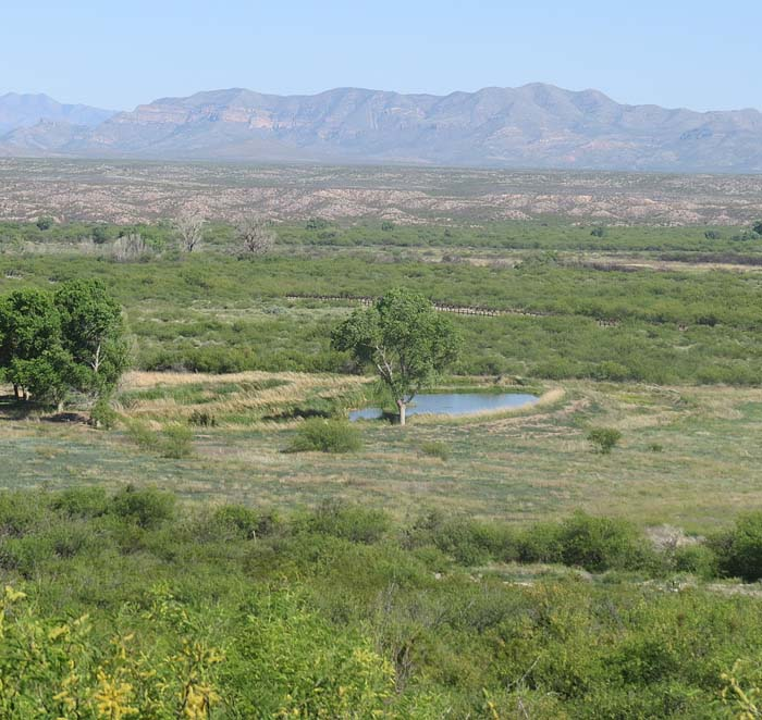 The US-Mexico border is the fence line that runs right behind the top of the foliage of the Black Cottonwood tree in the middle of the picture.