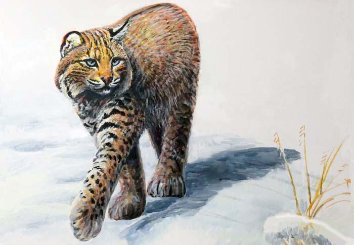 Bobcat walking for curating w b