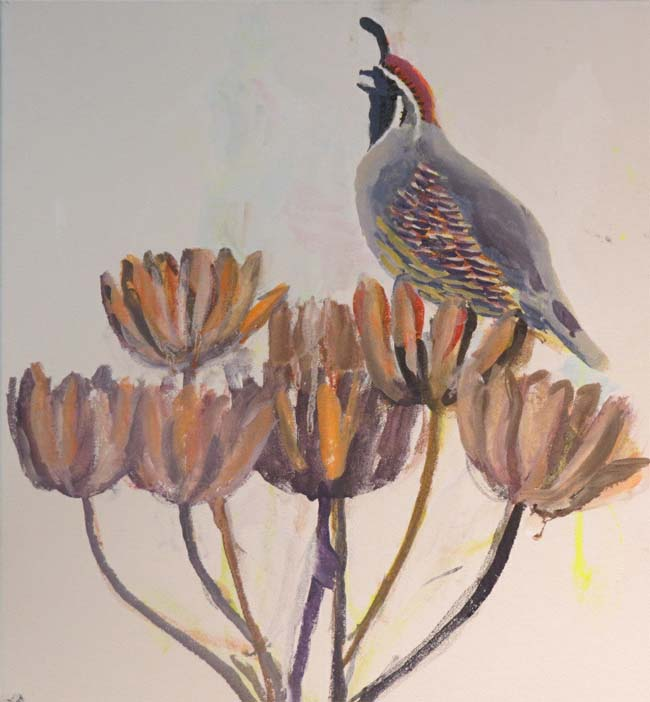 Gambel's Quail for curating