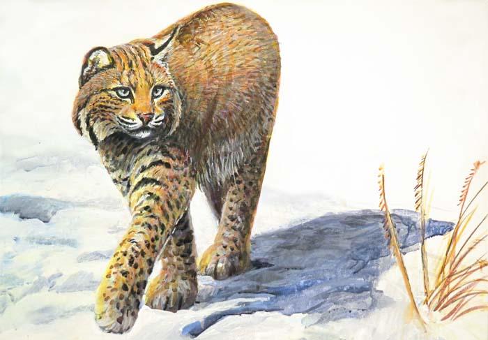 bobcat walking for ws 7 3 15