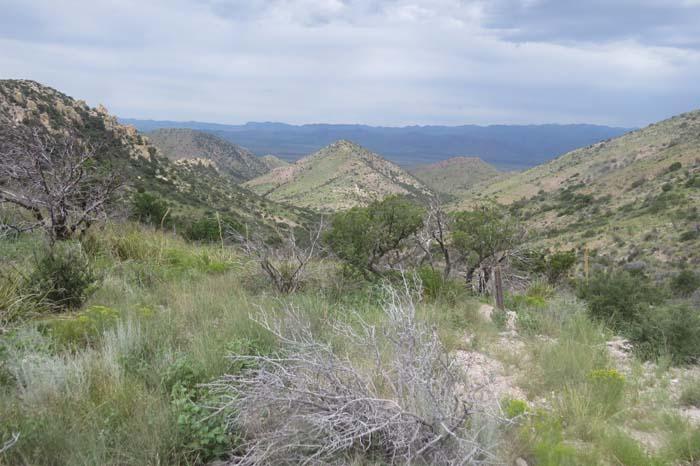august rain blog chiricahuas from the pass