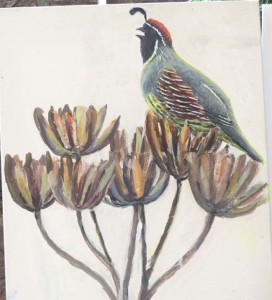 gambel's quail painting august 8 2015