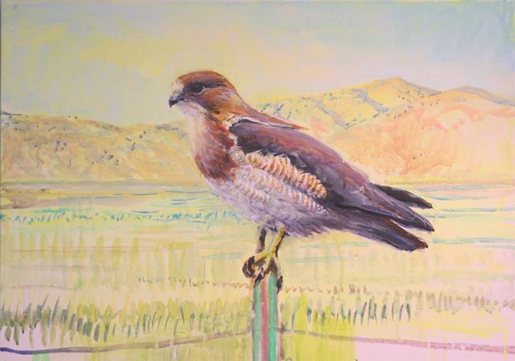 end of august blog swainson's hawk ptg
