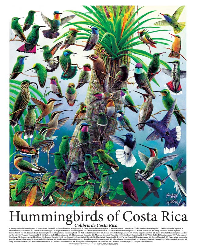 #246 Hummingbirds of Costa Rica 14 x 18