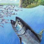 "#438 King Salmon at Pillar Point (12 x 16"")"