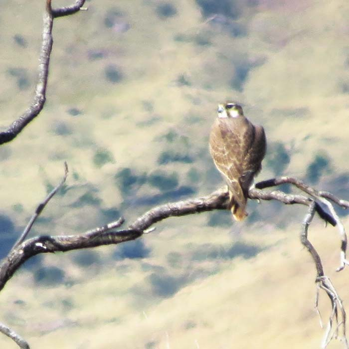 prairie falcon portal daytrip oct 2015 for ws
