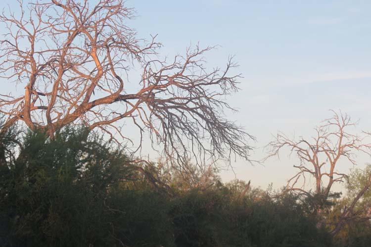 Texas 2015 dead trees
