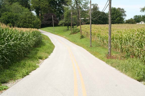 Here is corn on both sides of the road in Chester County, PA, but it could be any county, US. Our country is now nothing but a big corn field.