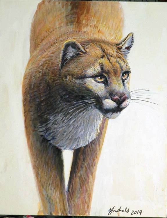 cougar Nov 5 2015 for ws