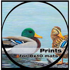 Prints - 8 x 10 mats