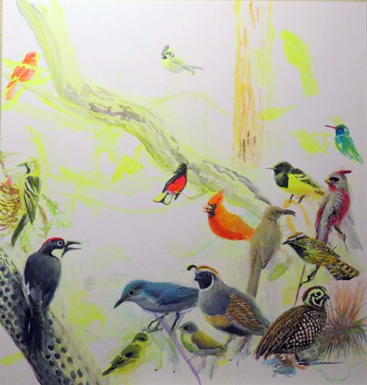 chiricahua birds feb 8 for ws