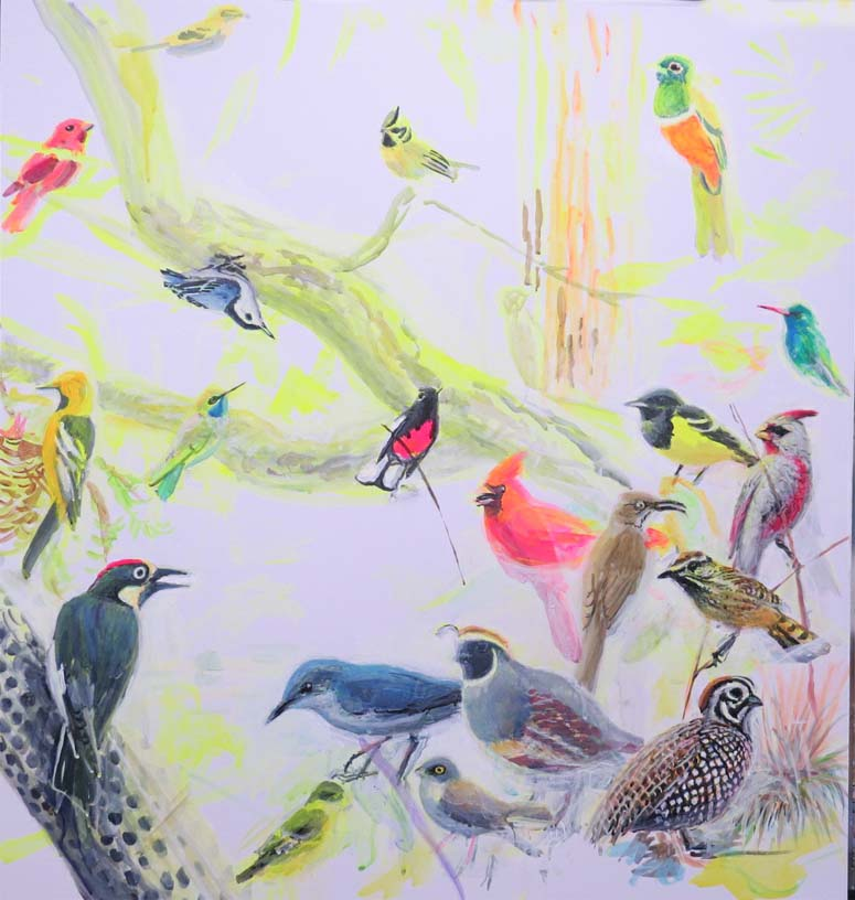 Chiricahua birds march 14 16