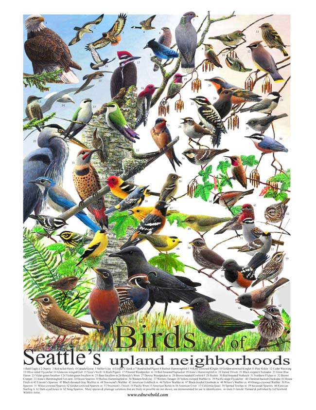 birds of seattle 14 x 18 final for ws