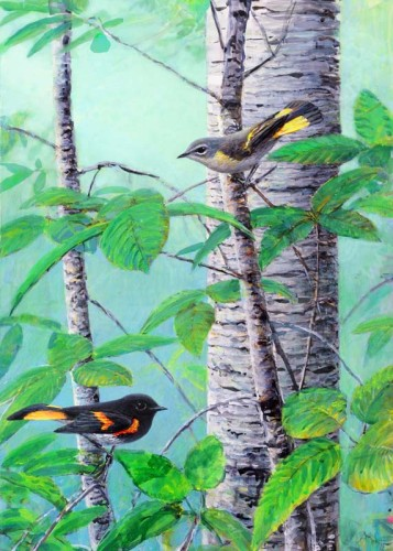 redstarts for 12 x 16 March 7 2016  for ws