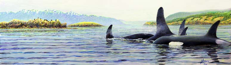 Orcas in the salish sea for ws