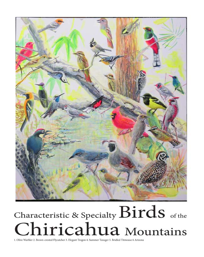 birds of the chircahuas 12 x 16 for ws 4 13 16
