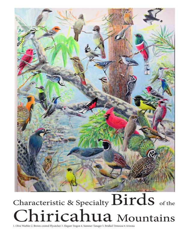 birds of the chircahuas 12 x 16 for ws 5 9 16