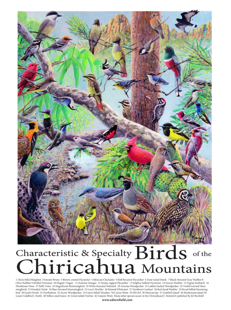 birds of the chircahuas 12 x 16 for ws