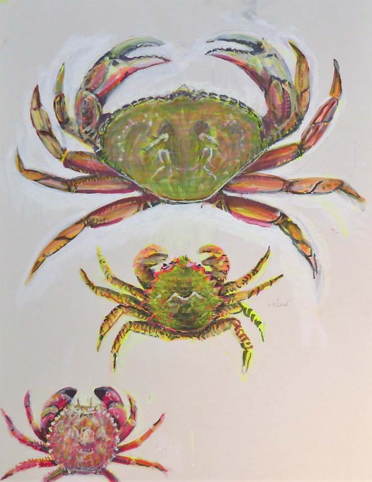 crabs for blog july 2016