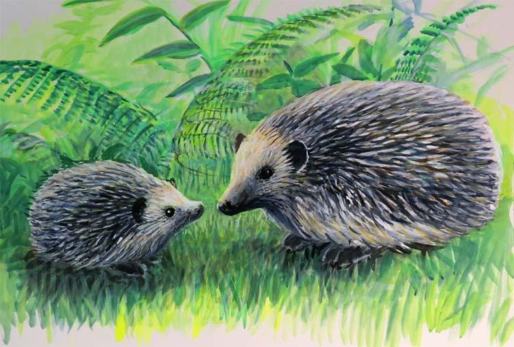 hedgehog for ws