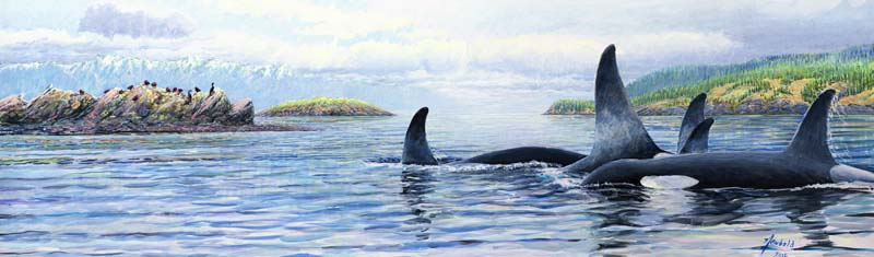orcas in the salish sea XL for ws