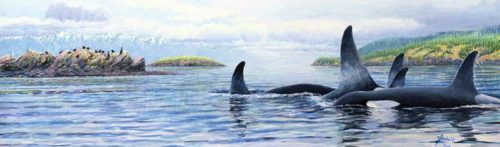 orcas in the salish sea for XL for ws