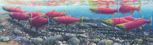 return-of-the-sockeye-for-xl-august-18-2016-for-ws